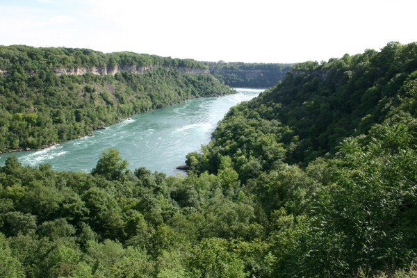 Hemlock Woolly Adelgid was found in Ontario's Niagara Gorge