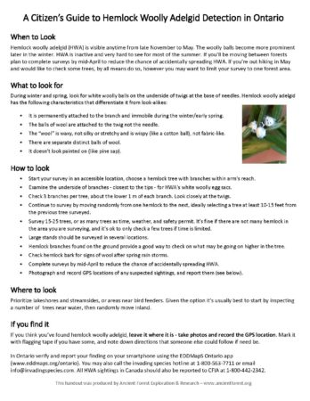 HWA detection handout Ontario_Page_1