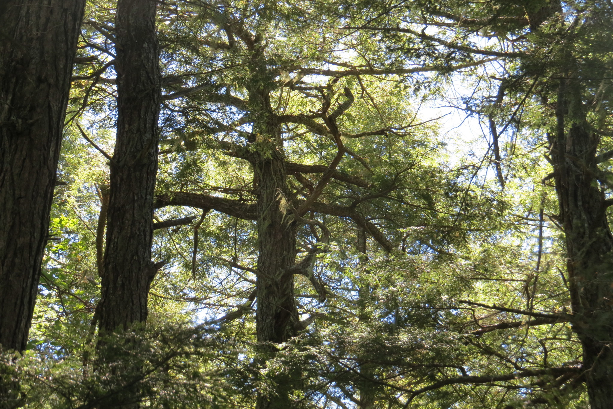 Hwa Newsletter  Ancient Forest Exploration  Research